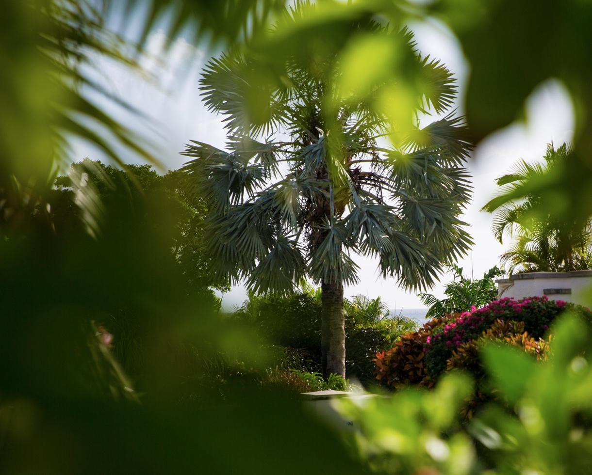 Paradise Beach Nevis Gardens