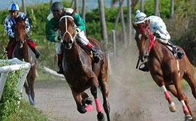 Nevis Race Week horses