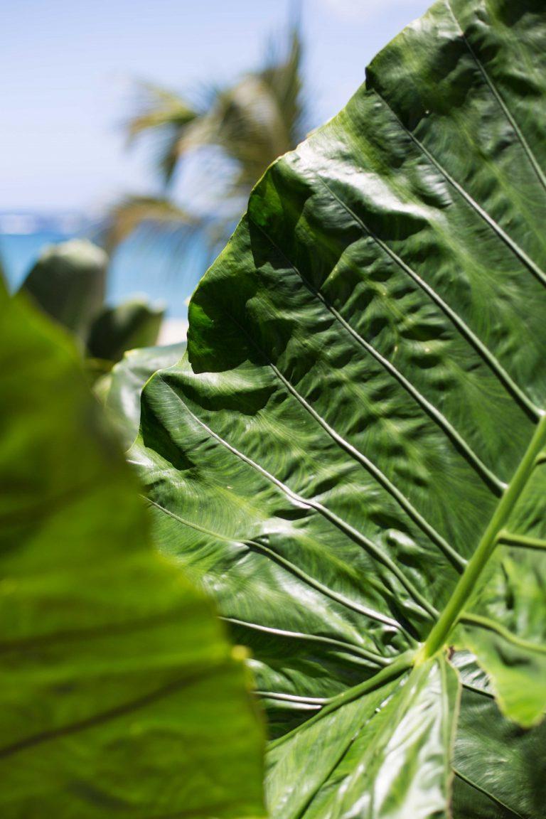 Paradise-Beach-Nevis_General1_CMYK